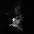 Full Moon by Natasa Cvetkovic