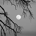 Full Moon Old Snag by Barbara Henry