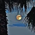 Full Moon Palm Tree 5 9/17 by Mark Lemmon