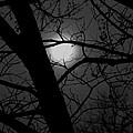 Full Moon Rising  by Eddie Miller