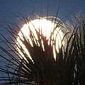 Full Moon Through The Palms by Zina Stromberg