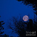 Full Moon With Trees by Byron Varvarigos