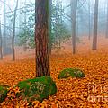 Full Of Autumn by Edgar Laureano