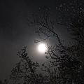 Full Pink Moon by Glenn Scano