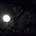 Fullmoon In Between The Trees  by Colette V Hera  Guggenheim