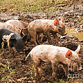 Fun In The Mud by Bob Phillips