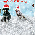 Fun Merry Christmas Card by Debbie Portwood