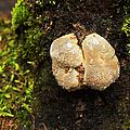 Funghi by Belinda Greb