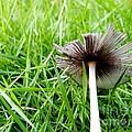 Fungi by Amar Sheow