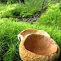Fungi Cup by Joshua Bales