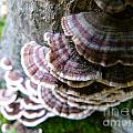 Fungus Growing Up  A Tree by Christine Stack