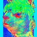 Funky Alpaca Baby by Sue Jacobi