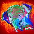 Funky Baby Elephant Blue by Sue Jacobi