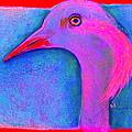 Funky Demoiselle Crane Bird Art Prints by Sue Jacobi