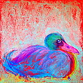Funky Duck In Snowfall by Sue Jacobi