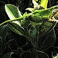 Fractal Nature South Carolina Green Lizard by Robert Rhoads