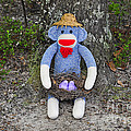 Funky Monkey - Purple Peeps by Al Powell Photography USA
