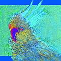 Funky Sulphur Crested Cockatoo Bird Art Prints by Sue Jacobi