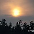 Funky Sun by Cheryl Baxter