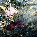 Pink Rose by Image-in Photoart
