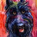 Funny Curious Scottish Terrier Dog Portrait by Svetlana Novikova