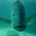 Funny Fish Face by Amy Cicconi
