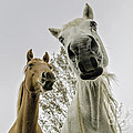 Funny Horses by Cindy Bryant