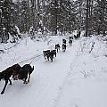 Fur Rondy Races by Tim Grams