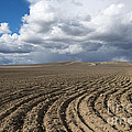 Furrows Before The Storm by Mike  Dawson