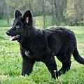 Furry Puppy by Sandy Keeton