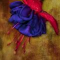 Fuschia Flower by Susan Candelario