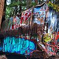 Gaffiti In The Candian Forest by Adam Jewell