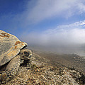 Galapagos Giant Tortoise Overlooking by Tui De Roy
