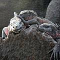Galapagos Islands 09 by Jeff Brunton