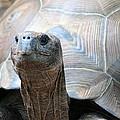 Galapagos Tortoise 1 by Sheri McLeroy