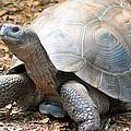 Galapagos Tortoise 2 by Sheri McLeroy
