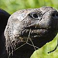 Galapagos Tortoise Galapagos Islands National Park Santa Cruz Island by Jason O Watson