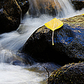 Galena Creek Trail  by Vinnie Oakes