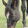 Galena Horse #3 by Todd Sherlock