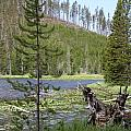 Gallatin River Yellowstone  by Christiane Schulze Art And Photography