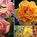 Beautiful Roses- A Collage by Dora Sofia Caputo Photographic Design and Fine Art