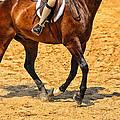 Gallop by Karol Livote