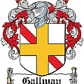 Gallway Coat Of Arms Irish by Heraldry