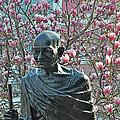 Union Square Gandhi With Magnolias by Diane Lent