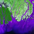 Ganges River Delta by USGS Landsat