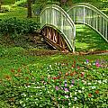 Garden by Alexey Stiop
