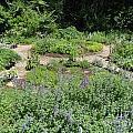 Garden by Allan Richter