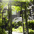 Garden Arbor In Sunlight by Elena Elisseeva
