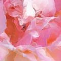 Garden Ballet by Gwyn Newcombe