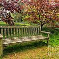 Garden Bench by Adrian Evans